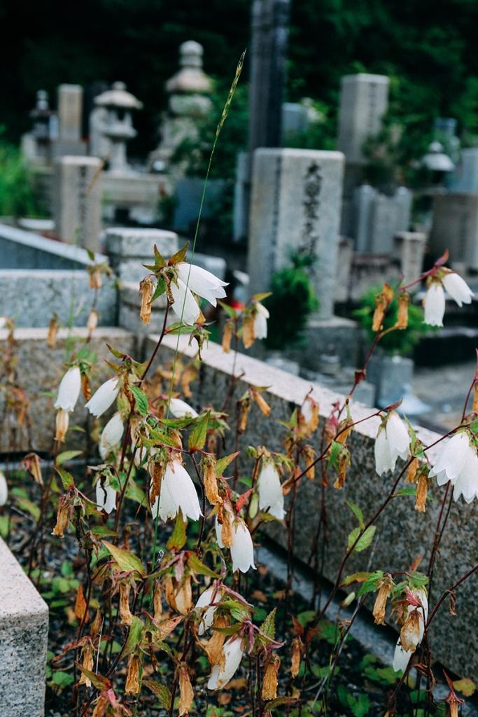 tomb flowers