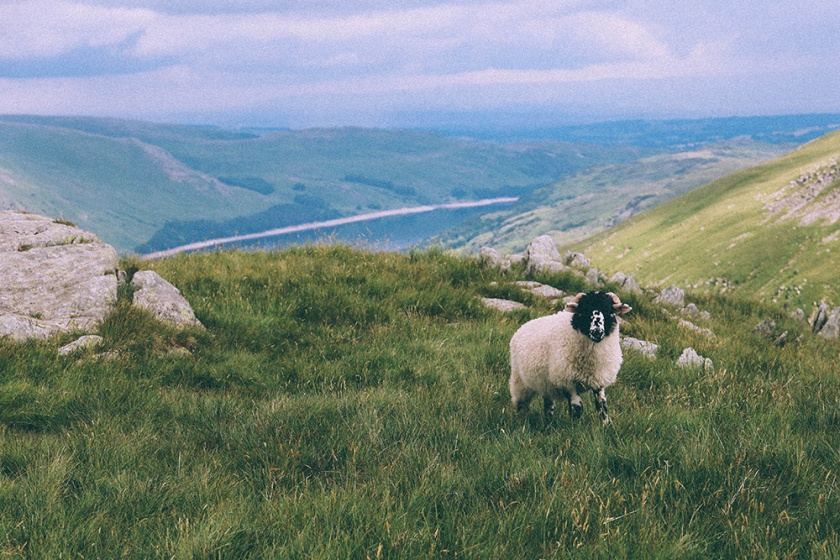 harter fell hike haweswater reservoir sheep