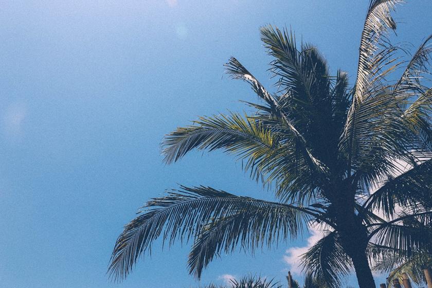 palm-tree-bingin-bali_