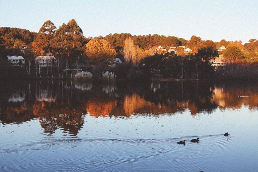 Daylesford Lake sunset ducks swim