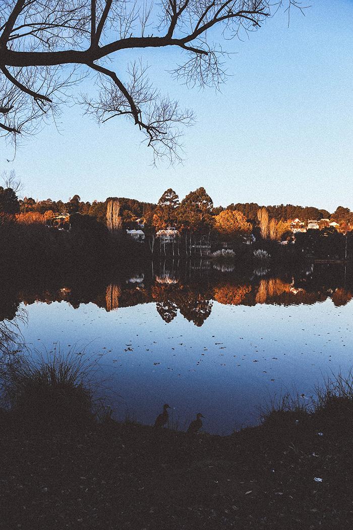 Daylesford Lake sunset ducks Photography Katie Mayor