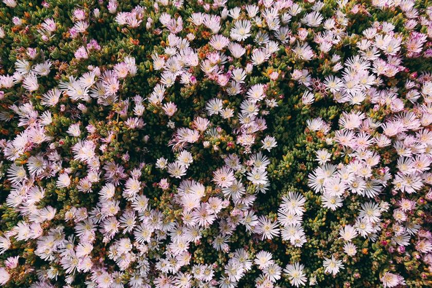 Minack Theatre Cornwall Penzance flowers
