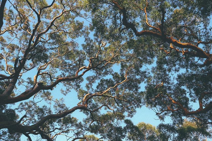 Berowra National Park Sunrise Sydney Barnett's Lookout bush