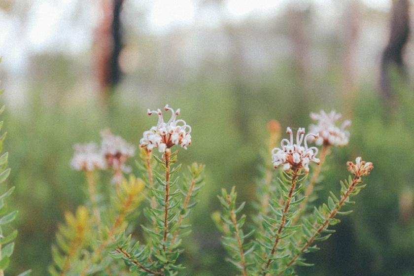 Berowra National Park Sunrise Sydney Barnett's Lookout flora
