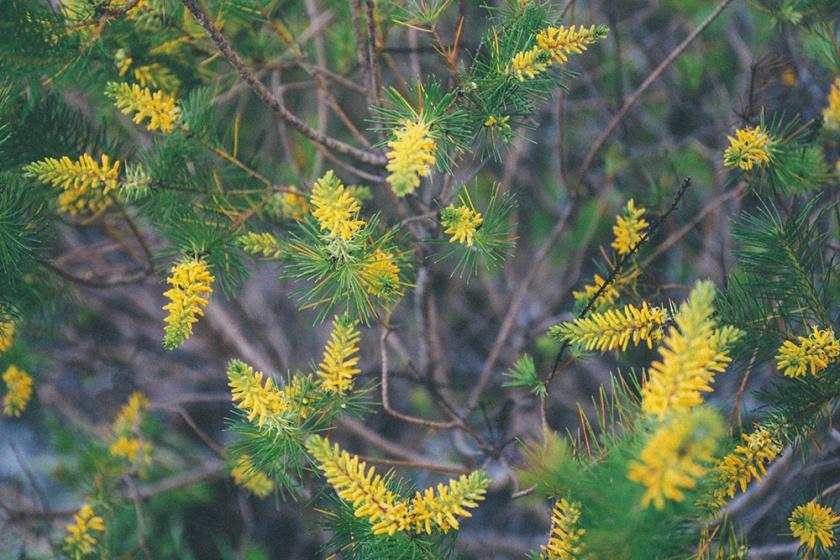Berowra National Park Sunrise Sydney Barnett's Lookout plants