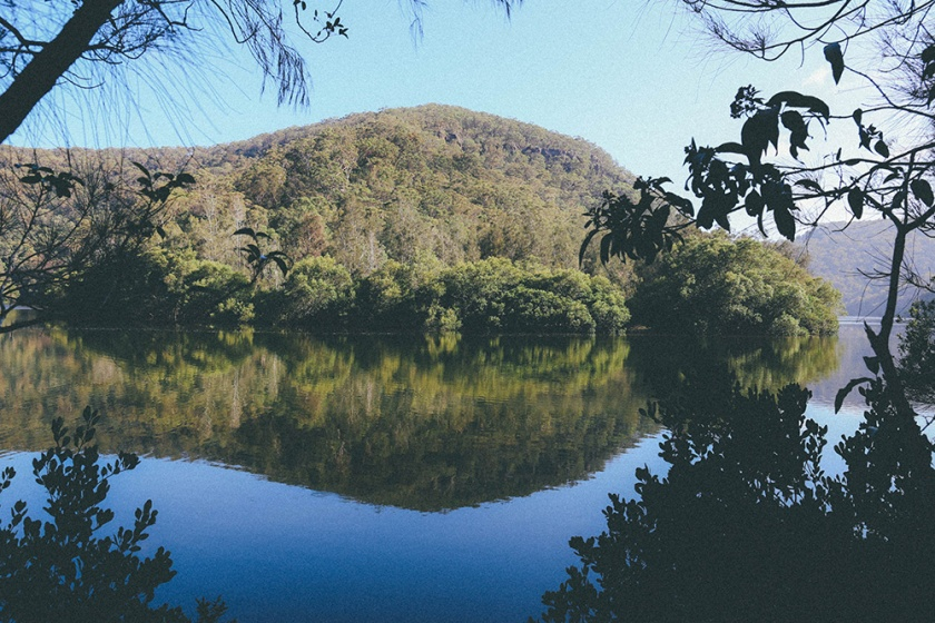Berowra National Park Sydney Crosslands Reserve walking track