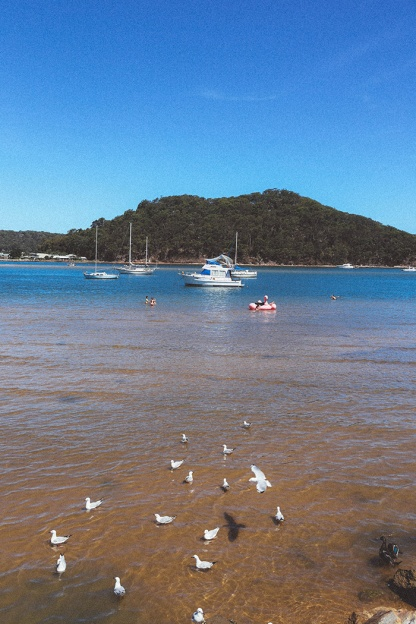 Sydney best ferry trips palm beach ettalong sand 2