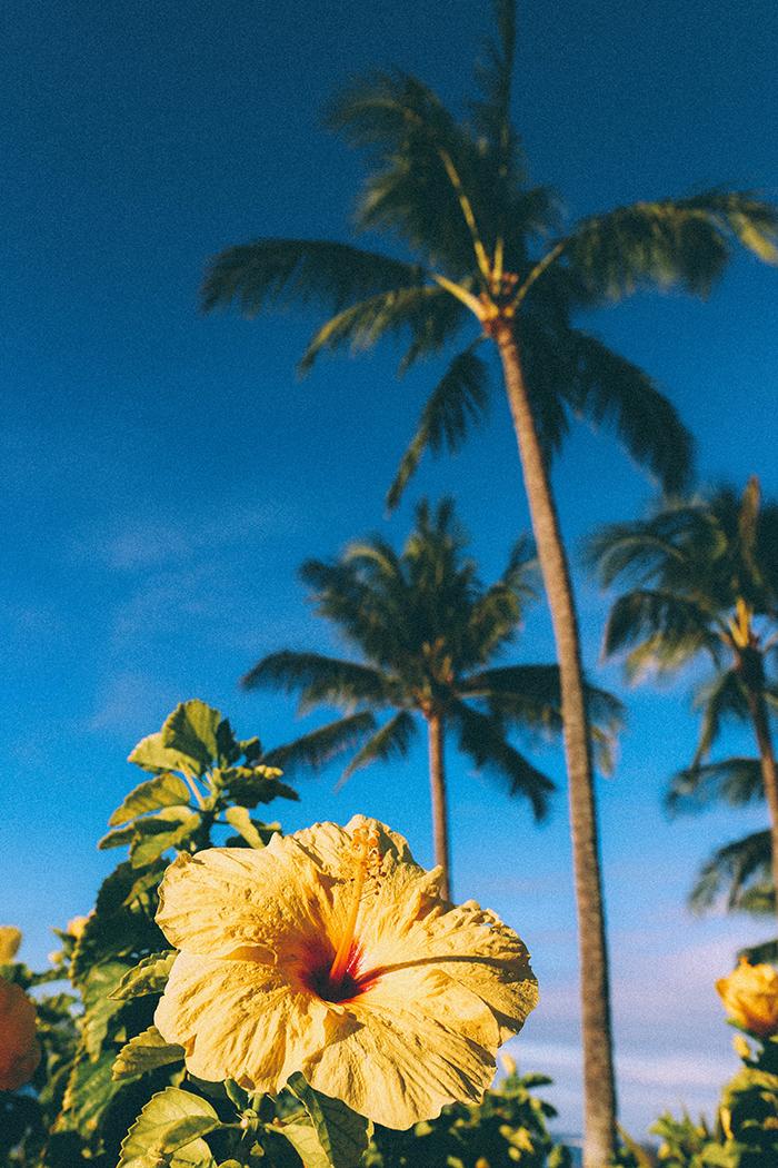 Koa Kea best hotels Kauai Poipu Beach hibiscus palm tree