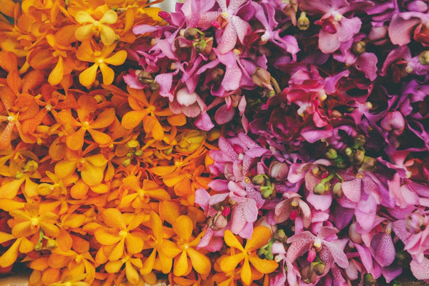 Bangkok thailand flower markets yellow pink