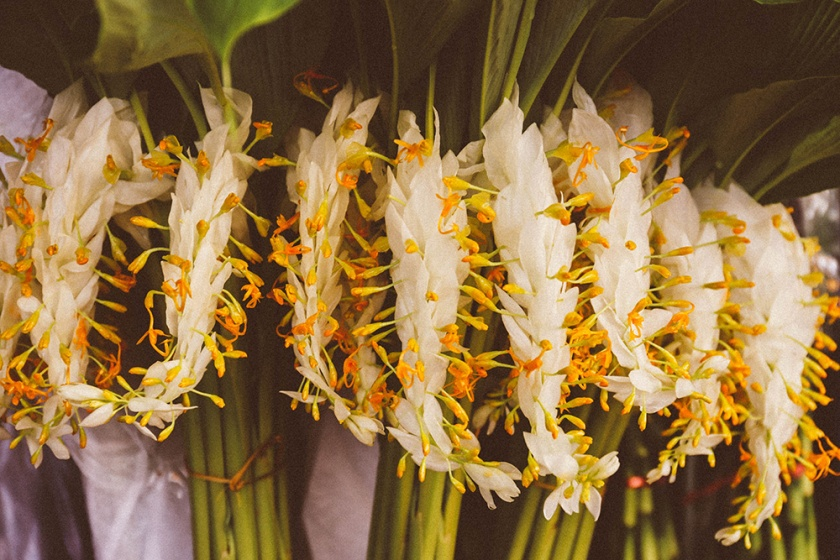 Bangkok thailand flower marketsunusual plants